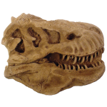 T Rex Head Paper Weight