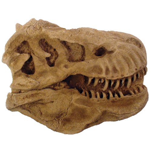 T Rex Head Paper Weight
