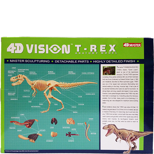 4D Vision T-Rex Anatomy Model back
