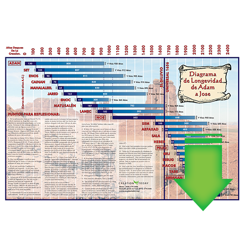 Spanish Longevity Chart (Download PDF)