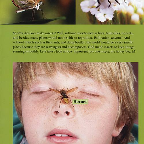 Bugs: Big & Small God Made Them All read-inside