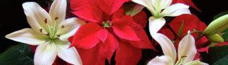 poinsettia-and-lilies-sandy-keeton