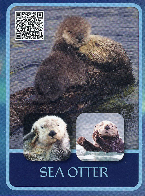 Amazing Animals of Alaska Creation Tract Cards (50 pack) card
