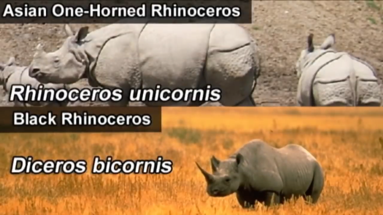 Asian one-horned rhinoceros is rhinoceros unicornis, and the scientific name for a two-horned rhinoceros is diceros bicornis.