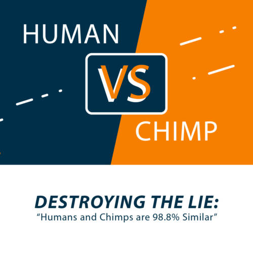 Human vs Chimp Webinar